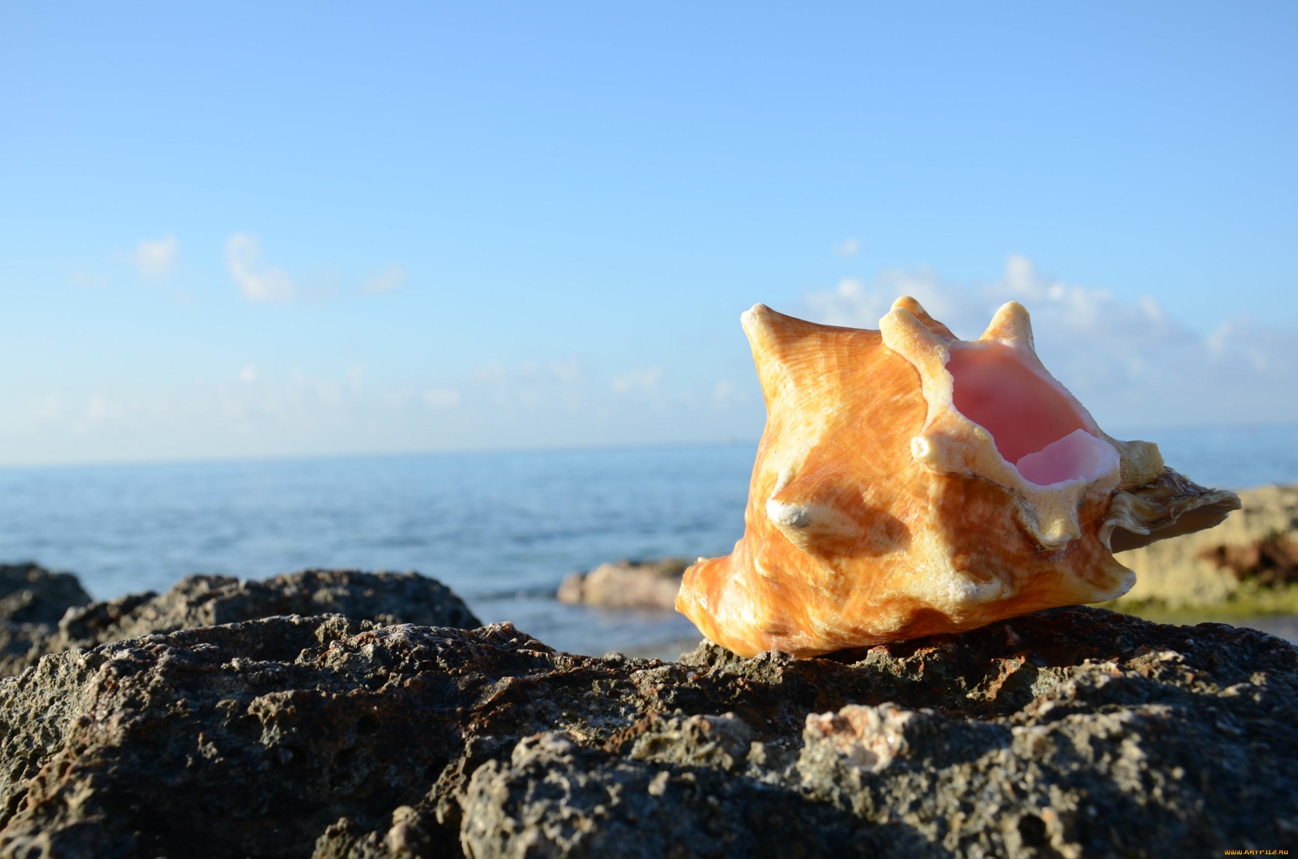 Ракушки морские картинки